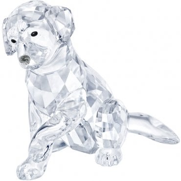 Swarovski Is Now Available Online at Market Cross Jewellers!